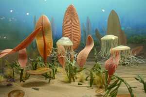 Primi organismi multicellulari:1