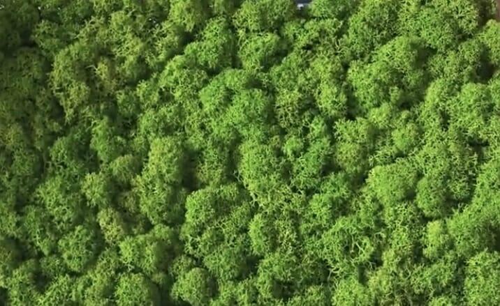 Il lichene stabilizzato