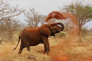 muoiono centinaia di elefanti