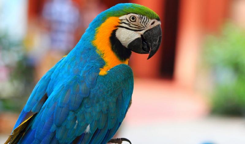 8 Animali esotici domestici da tenere in casa  Ultimoranews