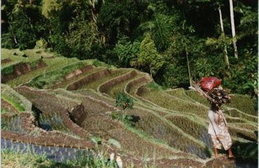 indonesia_4_terrazas