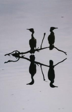 pantanal_4_paxaros_en_sombras