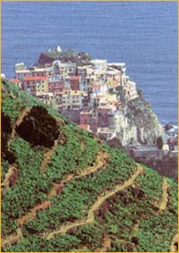 terrazas de vino
