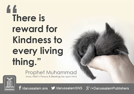 islamic quotes about kindness