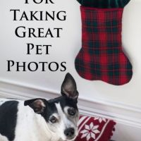 10 Tips For Photographing Your Pet