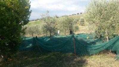 todi olio di oliva legalità