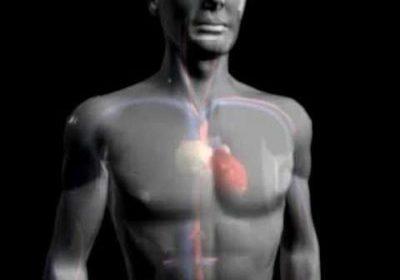 malattie cardiache cuore