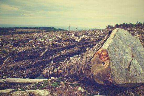 deforestazione riforestazione