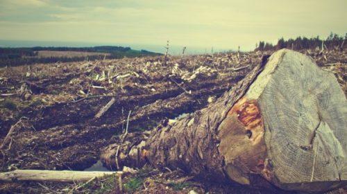 Greenpeace: la banca HSBC si impegna contro la deforestazione