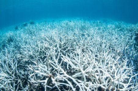barriera corallina futuro ecologico