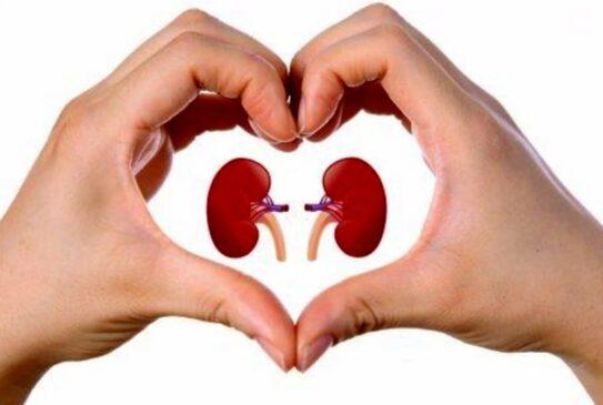rene tumore del rene