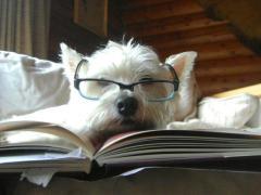cane_lettore