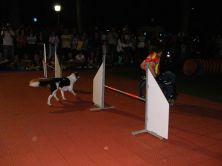 agility dog con panichi