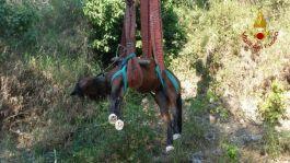 cavallo-ca (4)