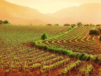 Programma sviluppo rurale, 5,4 milioni euro per imprese agricole danneggiate