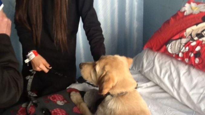 Cane entra in ospedale per sua padrona