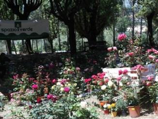 i giorni delle rose