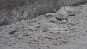 terremoto-danni-norcia (4)
