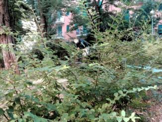 Manutenzione verde pubblico a Perugia è in forte ritardo