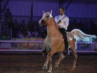 Mostra del cavallo a Città di Castello, una edizione all'altezza della storia