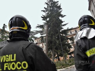 I Vigili del fuoco hanno abbattuto un pino in piazza Italia a Perugia
