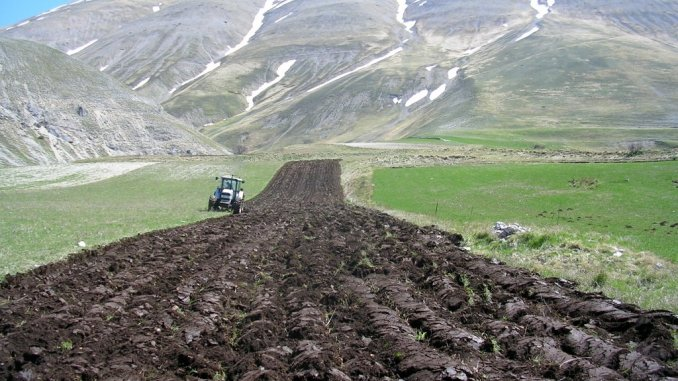Allarme per semina lenticchia a Castelluccio di Norcia