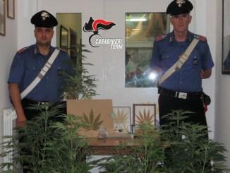 Agricoltore 64enne spagnolo coltiva marijuana, denunciato dai carabinieri