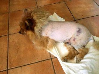 Cosa è successo a questo povero cane? Grave fatto accaduto a San Gemini