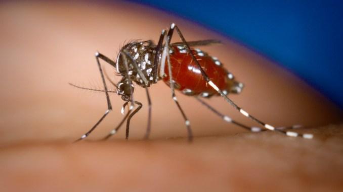 Chikungunya crea problemi anche in Umbria, manca sangue a Terni