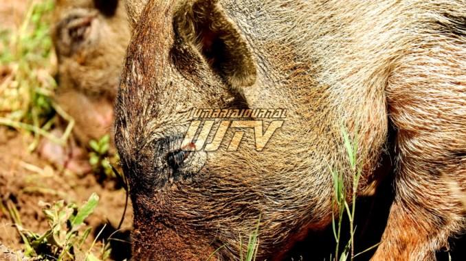 Danni fauna selvatica, Morroni, Confagricoltura diffida Regione per specie dannose