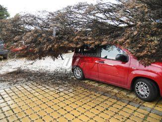 Un albero si schianta sopra due auto in via Don Bosco a Perugia