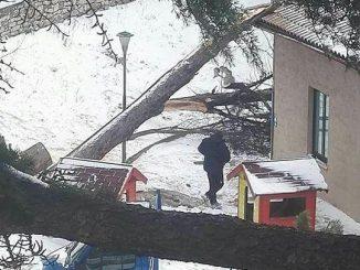Alberi carichi di neve cadono sulla scuola dell'infanzia a Ponte D'Oddi