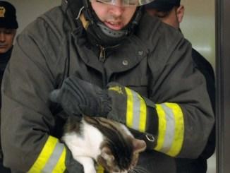 Muore un altro Vigile del fuoco, evviva i pompieri, eroi dimenticati!