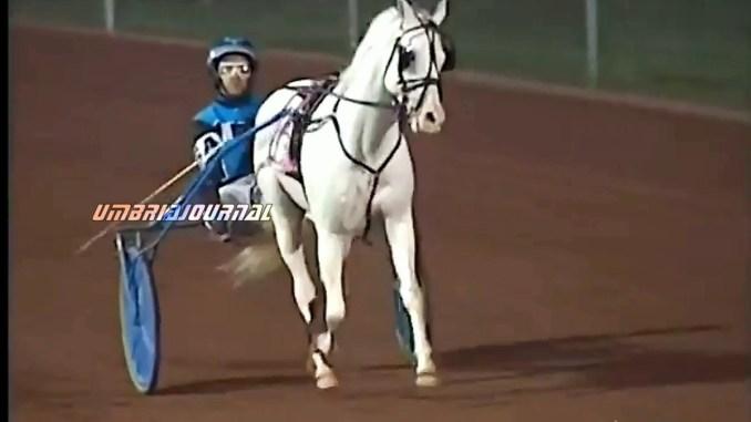Miracolo compiuto, Cavallina Bianca di Assisi, vince la sua prima gara in America