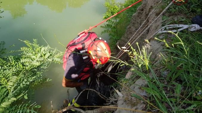 Due cani finiscono nel fiume Tevere e i vigili del fuoco li salvano