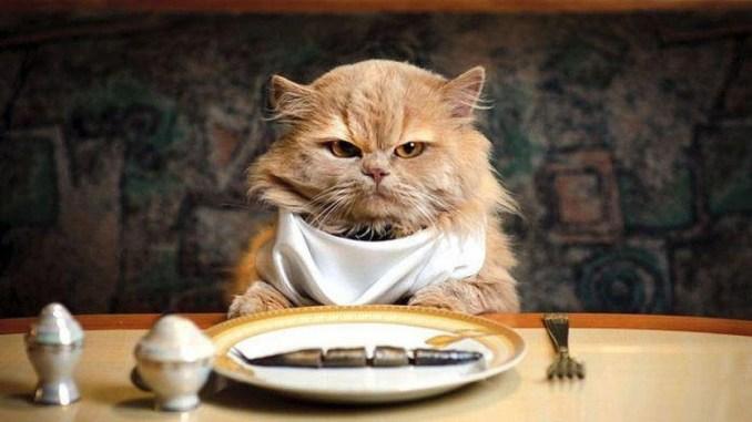 A Stroncone di Terni niente mangiare ai gatti in centro, ma per piacere!