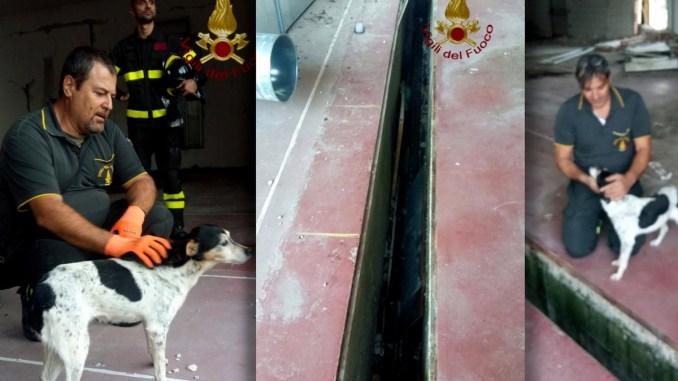 Vigili del fuoco salvano un cane a Norcia, la bestiola non ha più un padrone