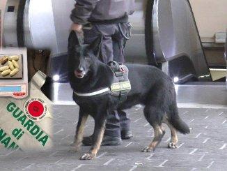 Spacciatore evaso arrestato a Padova dalla Finanza, aveva 11 ovuli di droga, operava a Fontivegge