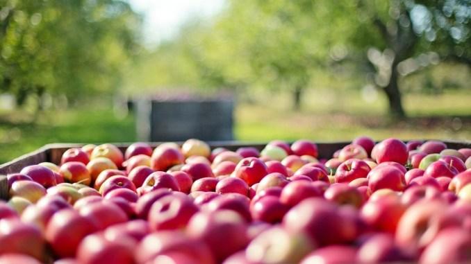 Agricoltura e innovazione Commissione europea sceglie modello Umbria