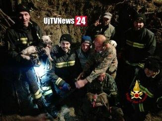 Vigili del fuoco salvano quattro cani, erano nella tana di un'istrice a Resina di Perugia