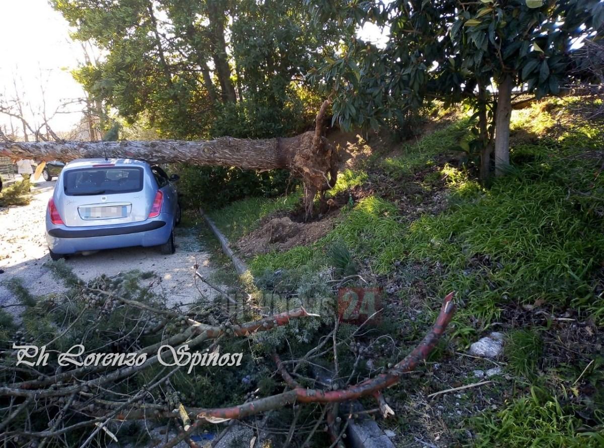 Piante e alberi di schiantano su auto per forte vento, è allerta