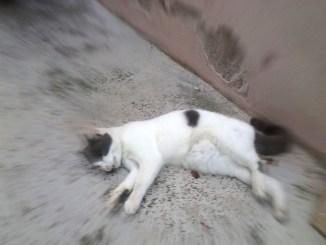 Gatti uccisi con liquido antigelo a Narni, crimini contro animali indifesi