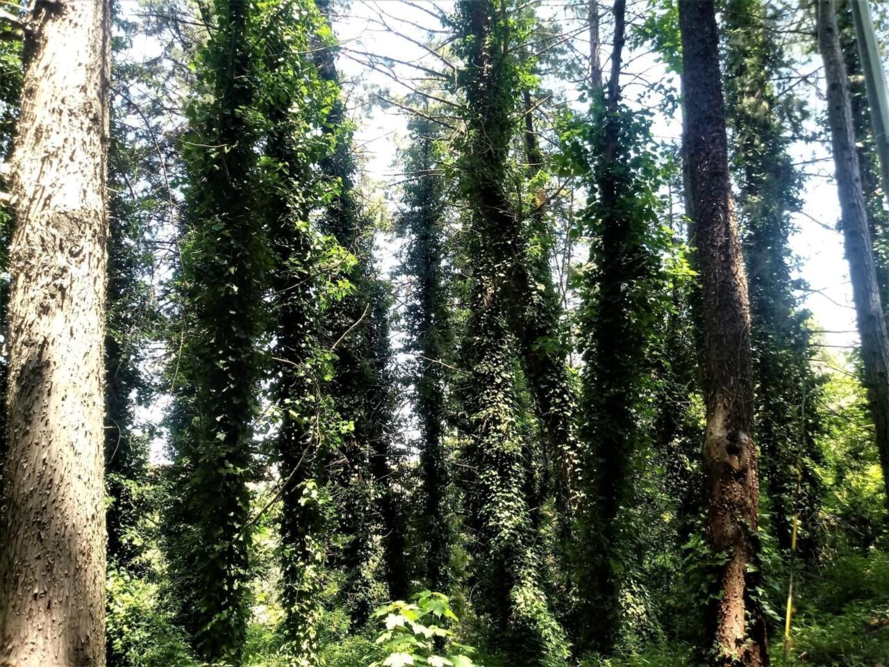 ✍ I Racconti – A Monteluce c'è ancora un bosco, salendo su dal Tevere verso Perugia