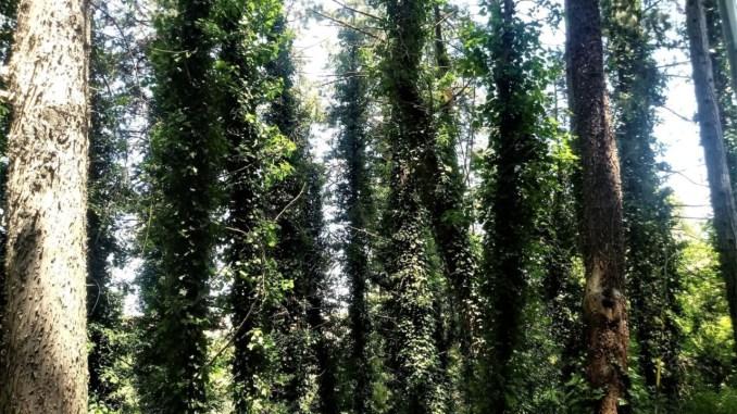 A Monteluce c'è ancora un bosco, salendo su dal Tevere verso Perugia