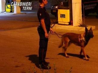 Controlli a largo raggio dei carabinieri di Terni a Ferragosto