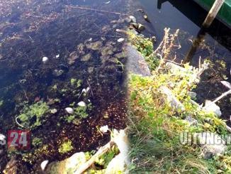 Che succede al Lago Trasimeno? Strana moria di pesci in diverse zone
