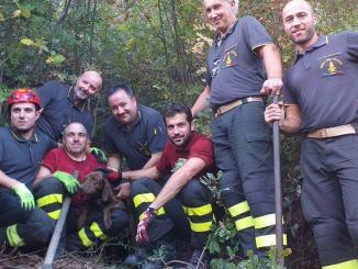 Cane da caccia recuperato dalla squadra dei vigili del fuoco di Gaifana