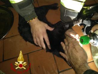 Incendio abitazione, vigili del fuoco salvano gatto che aveva respirato fumo