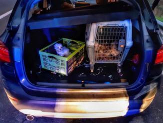 Sei cuccioli di cane rinchiusi in gabbia, polizia intercetta due trafficanti