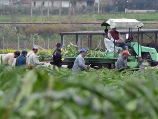Per le imprese agricole umbre 1 milione e 150 mila euro in conto capitale